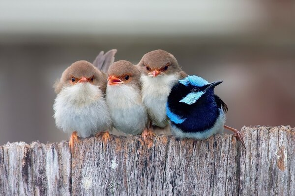 Cute Little Birds