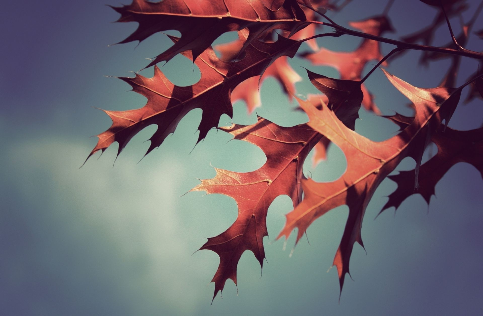 leaves autumn background Photo Wallpaper macro