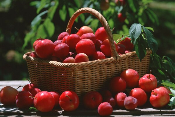 red leaf Plum basket