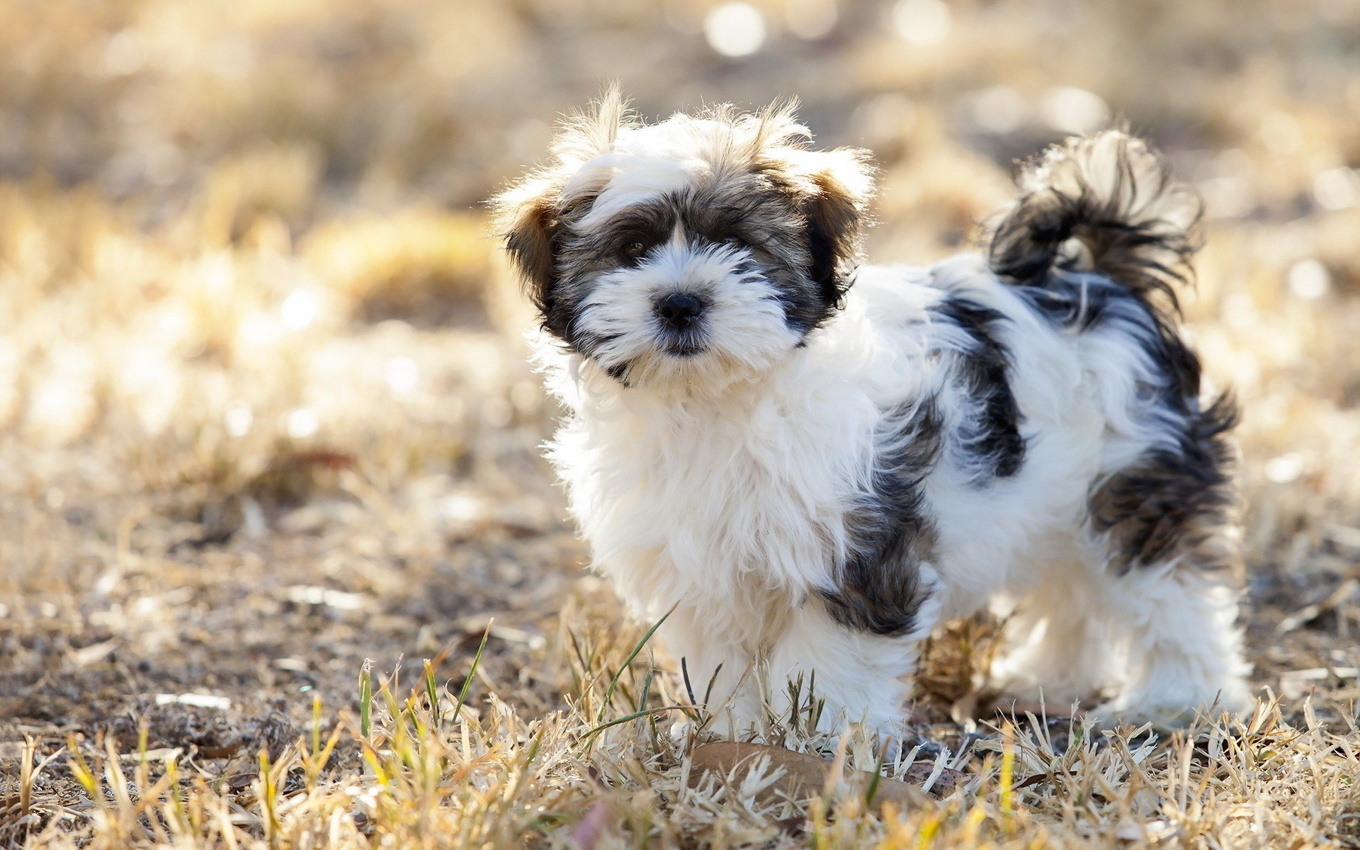dogs animal dog cute mammal nature pet little grass fur outdoors portrait canine puppy fluffy dog cute dog
