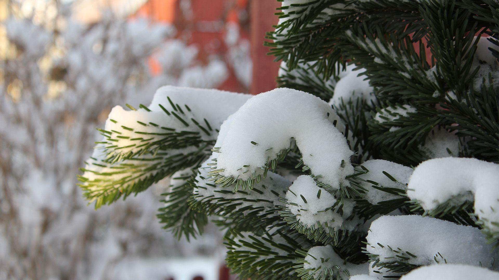 Ели в снегу снег зима  № 2793529 загрузить