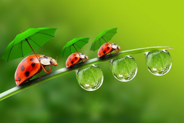 Ladybugs with Umbrellas