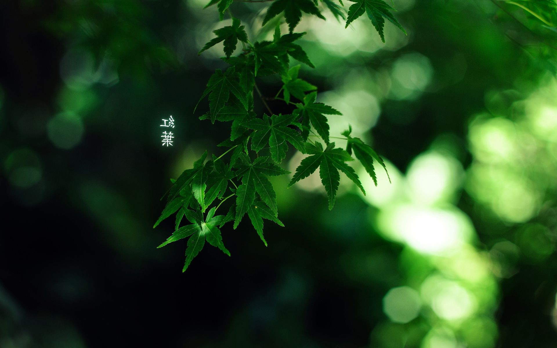 green colour by burningmonk characters 1920x1200 Leaves