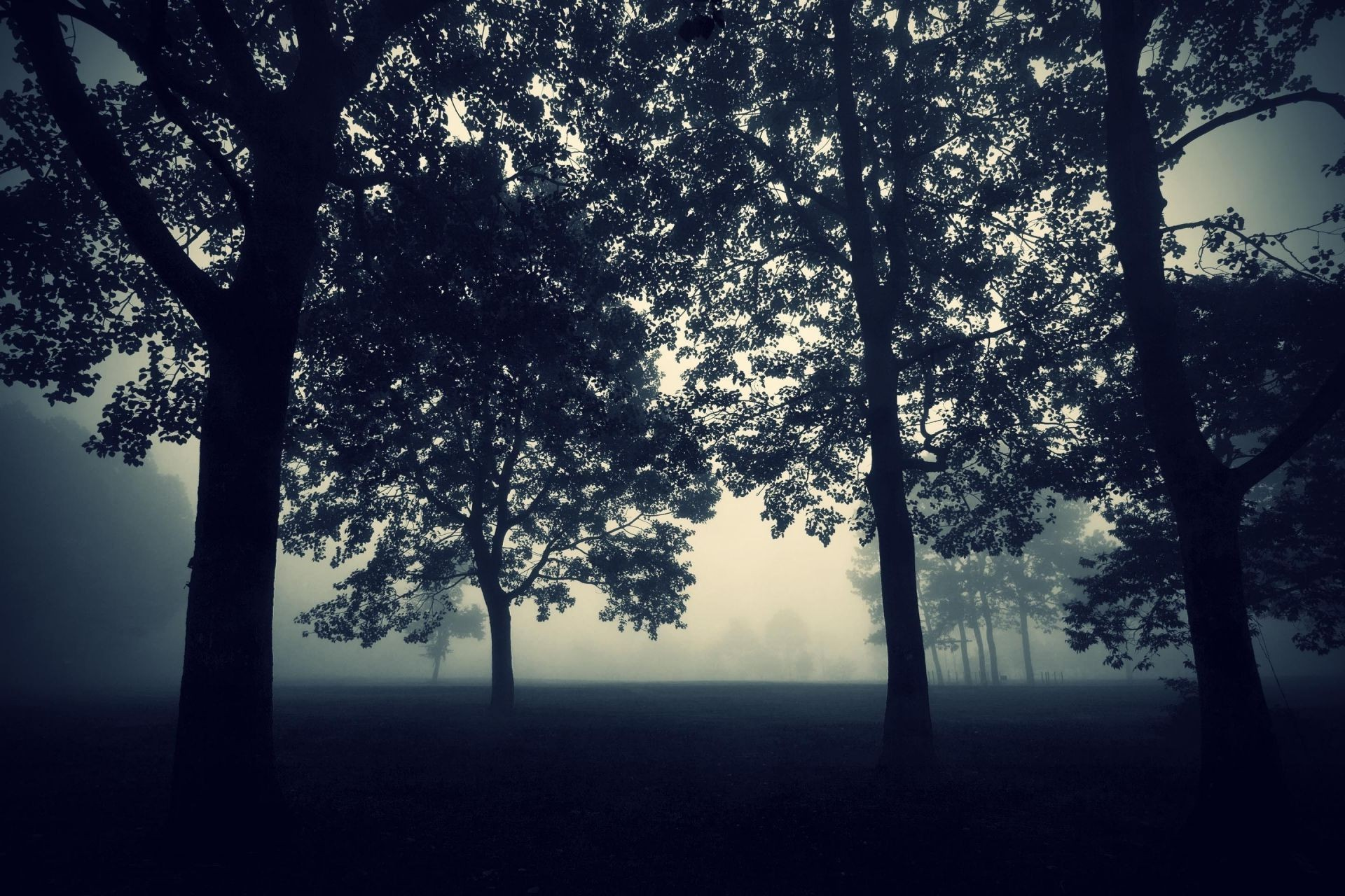 evening the Trees the fog the dark the twilight nature mysticism