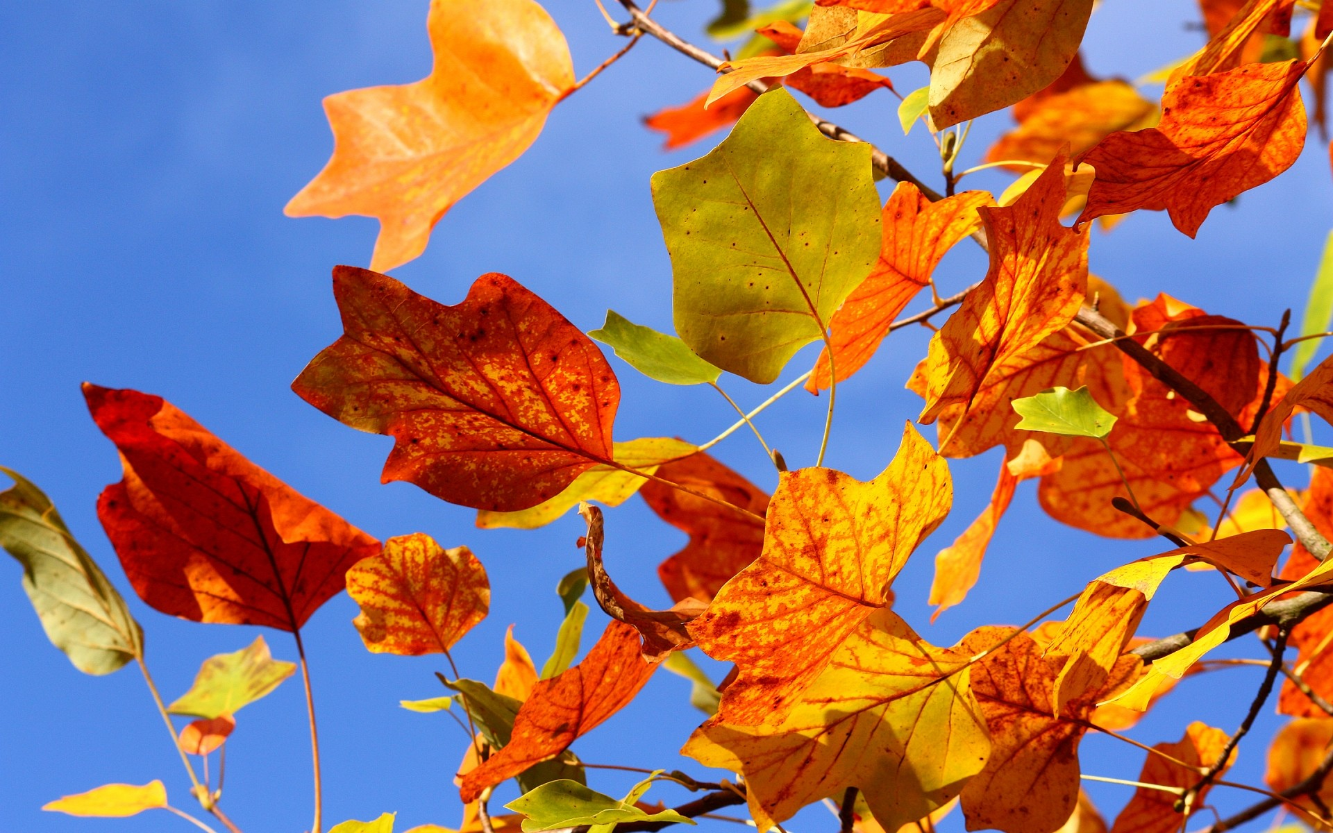 Autumn Colorful Leaves Android Wallpapers For Free