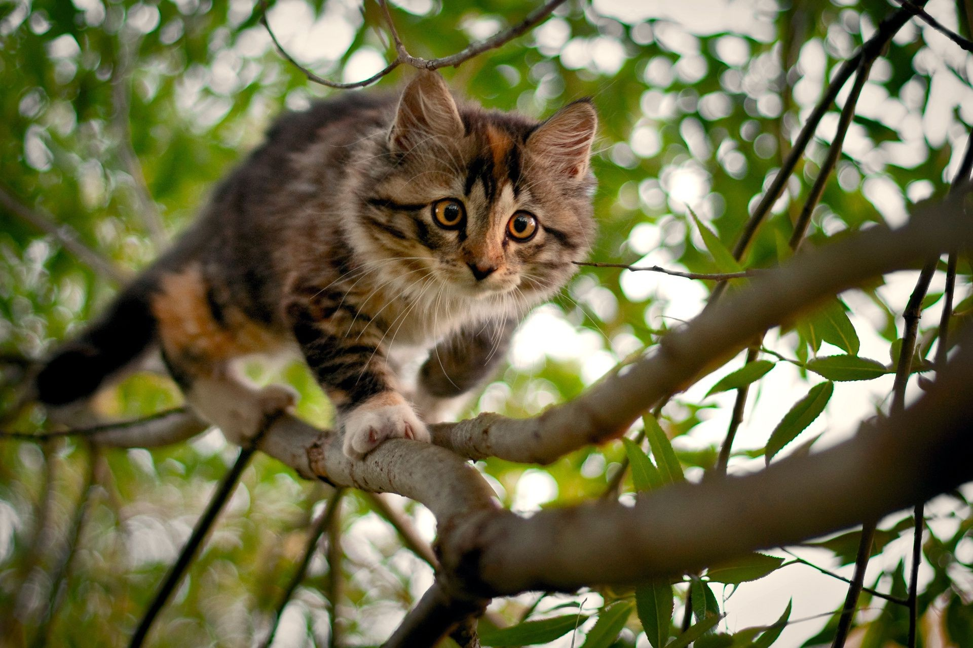 Kitten the branches of the tree