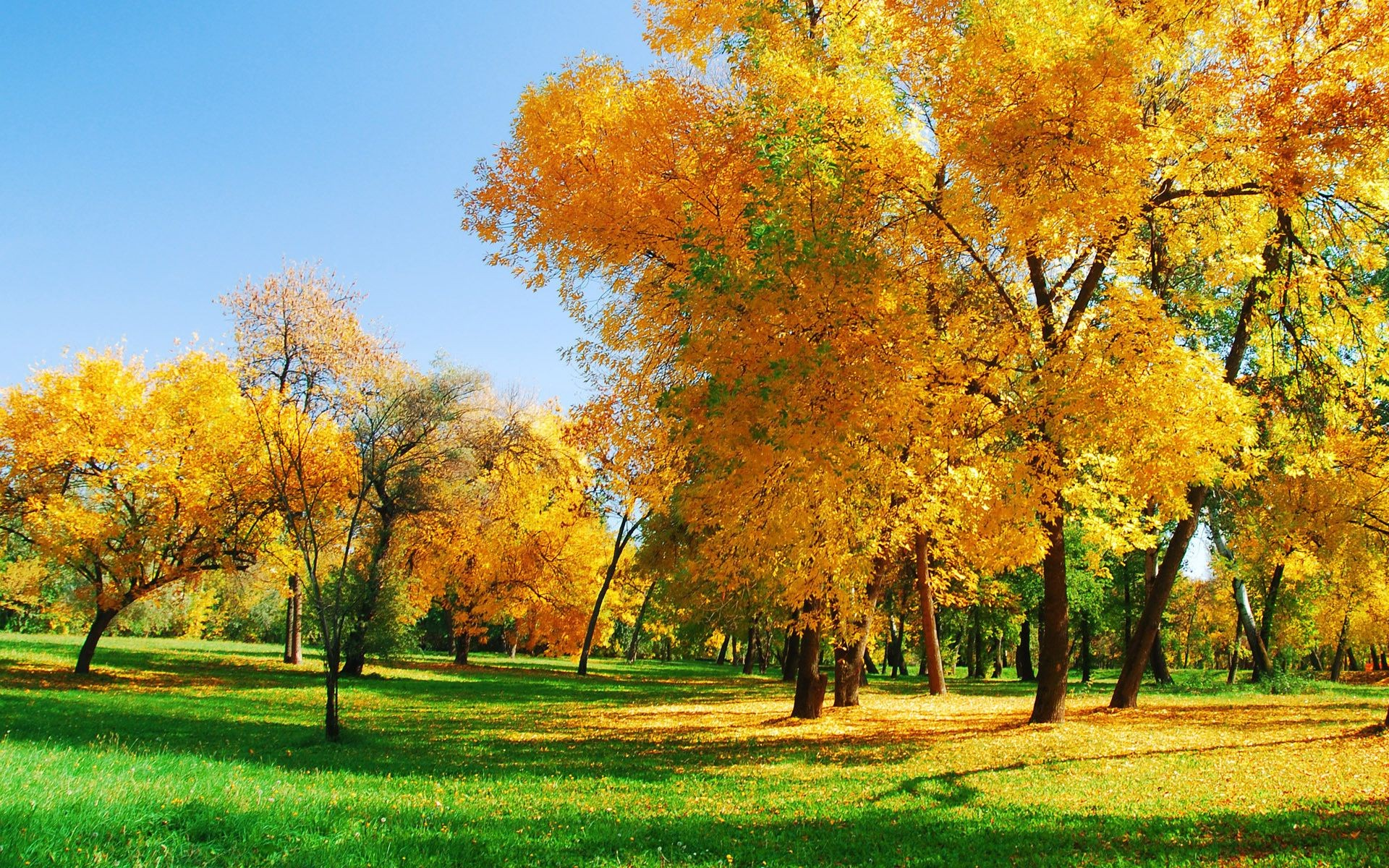 trees fall tree leaf season park landscape nature rural branch bright maple fair weather countryside gold wood scene grass scenery environment scenic