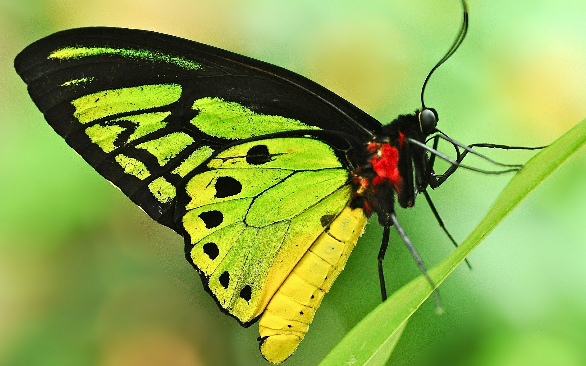 Green Butterfly. Android Wallpapers For Free