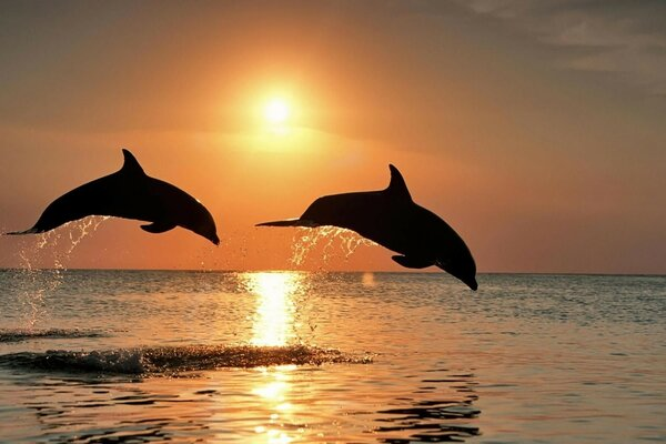 sea sunset Dolphins