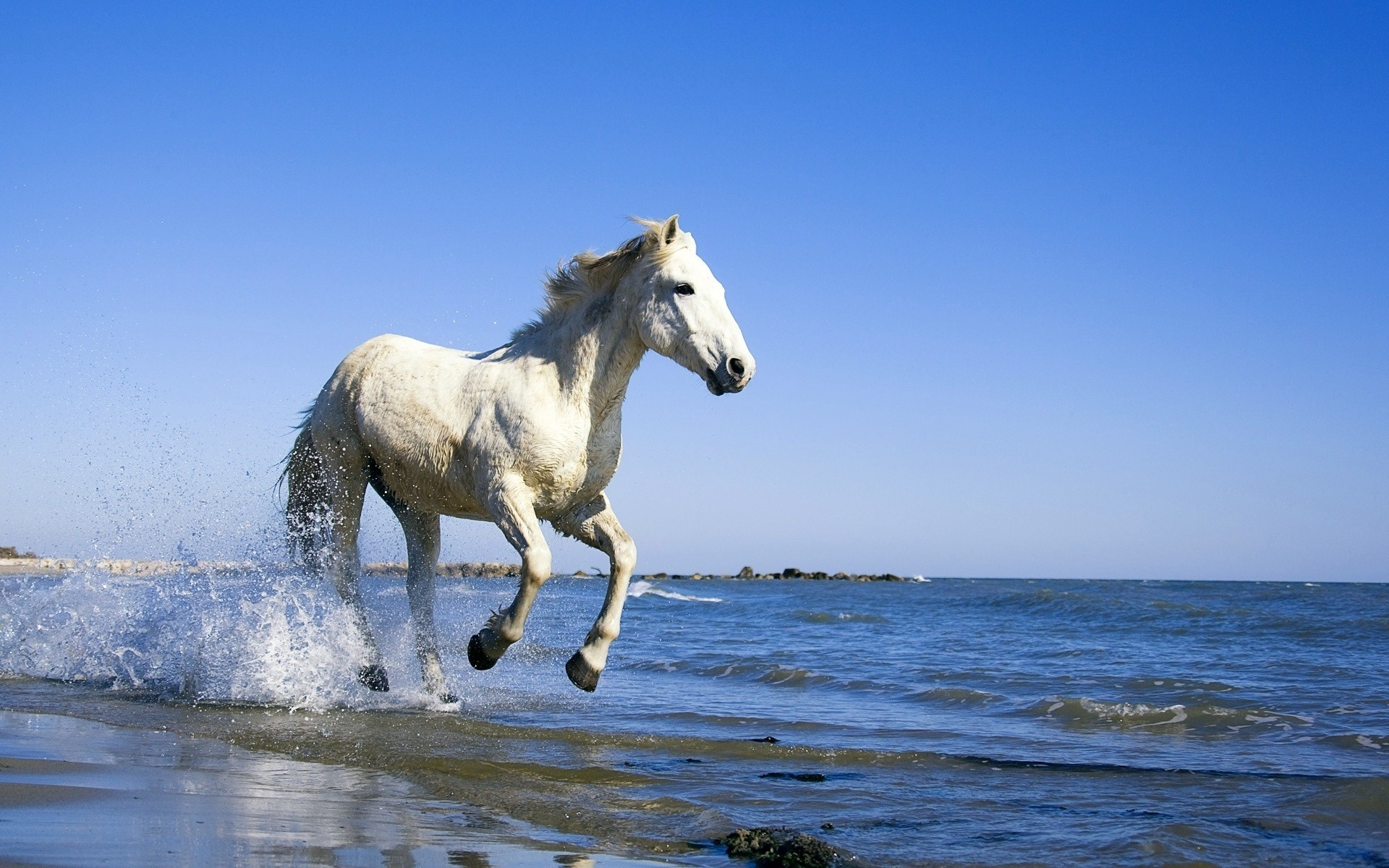 animals mammal horse mare outdoors water cavalry sky nature animal summer freedom stud ocean free relaxing