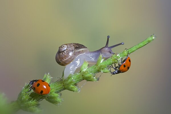 Snail and Ladybugs