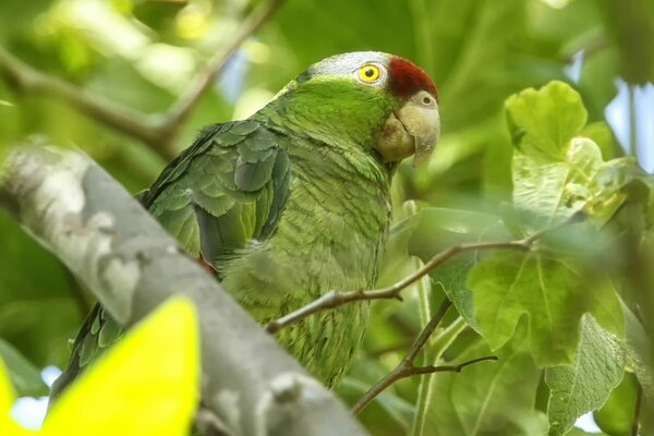 Exotic Green Parrot