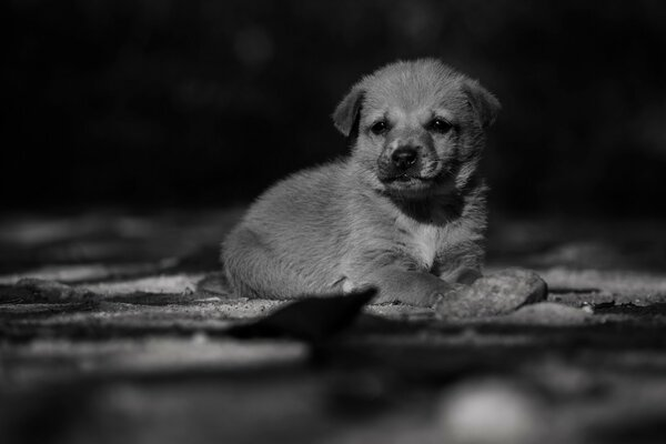 Adorable Lonely Puppy