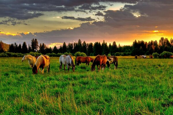 horse horse field Nature summer meadow meadow horses