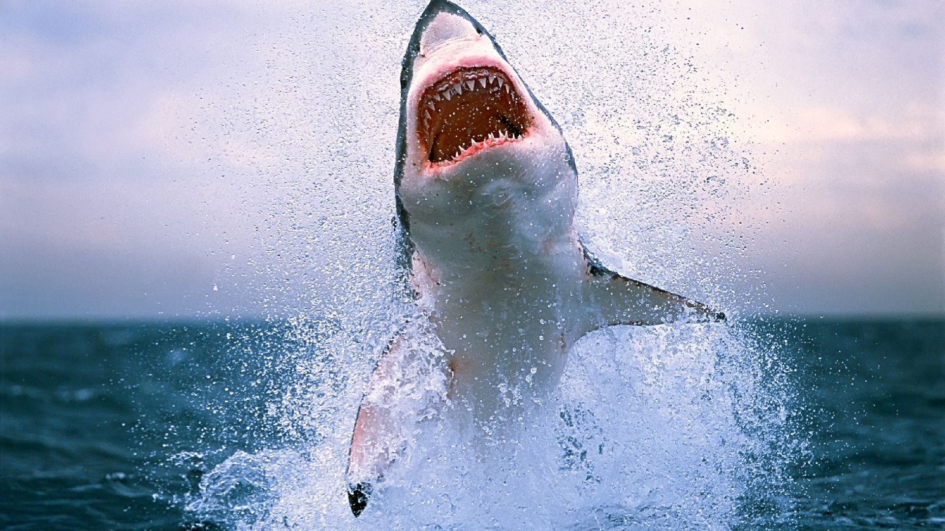 Sea shark - Android wallpapers