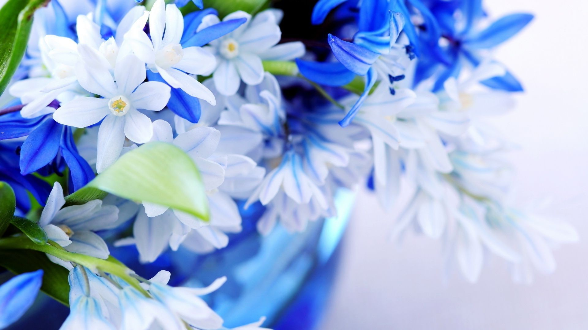 A Bouquet Of Pale Blue Flowers The Color Blue Sheets Phone