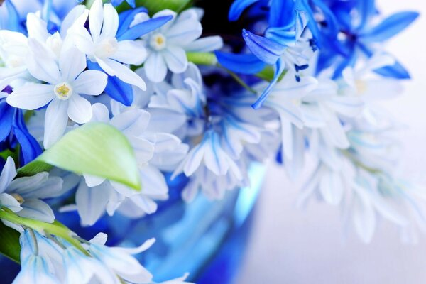 a bouquet of pale blue Flowers the color blue sheets
