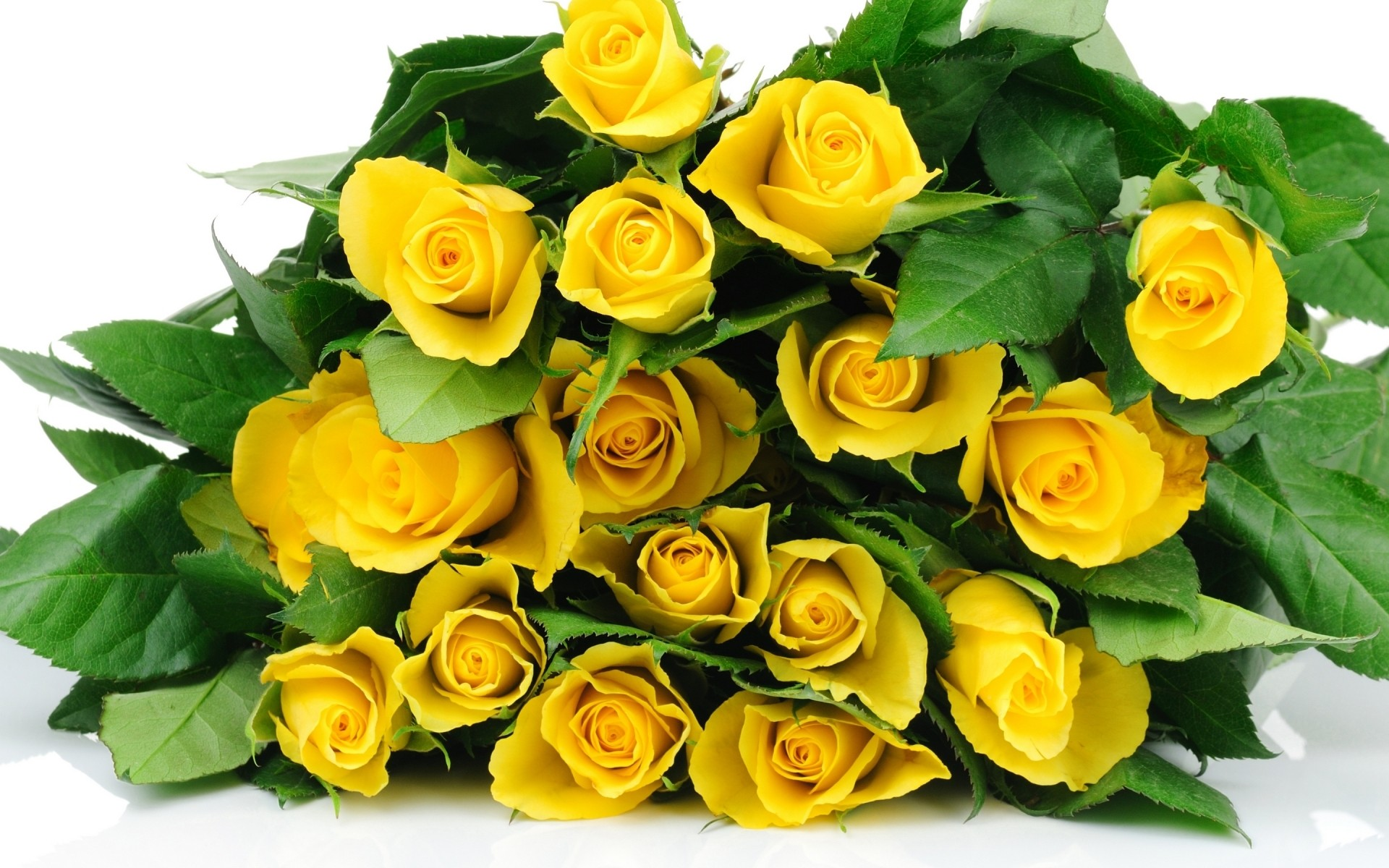 Yellow Roses Bucket Android Wallpapers For Free