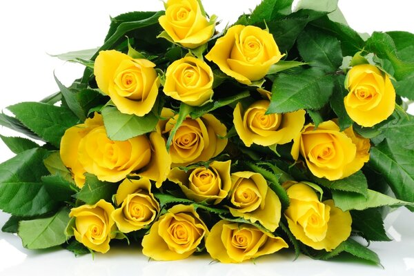 Yellow Roses Bucket