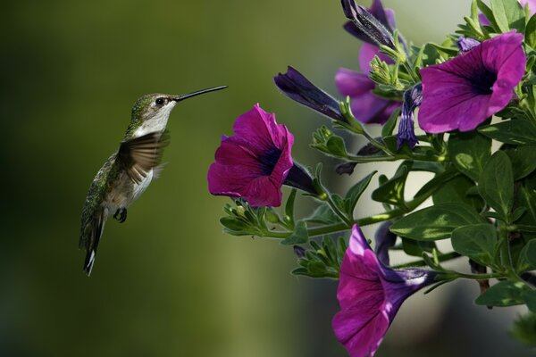 Bird and Purple Flowers