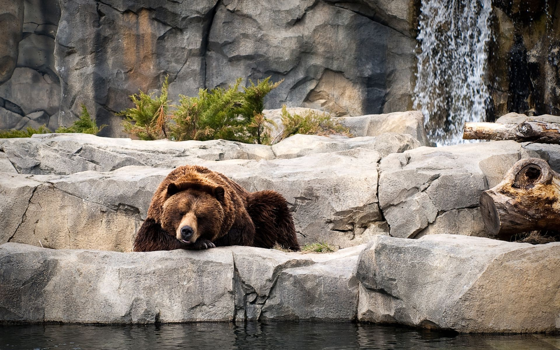 bears water mammal nature wildlife rock outdoors wild