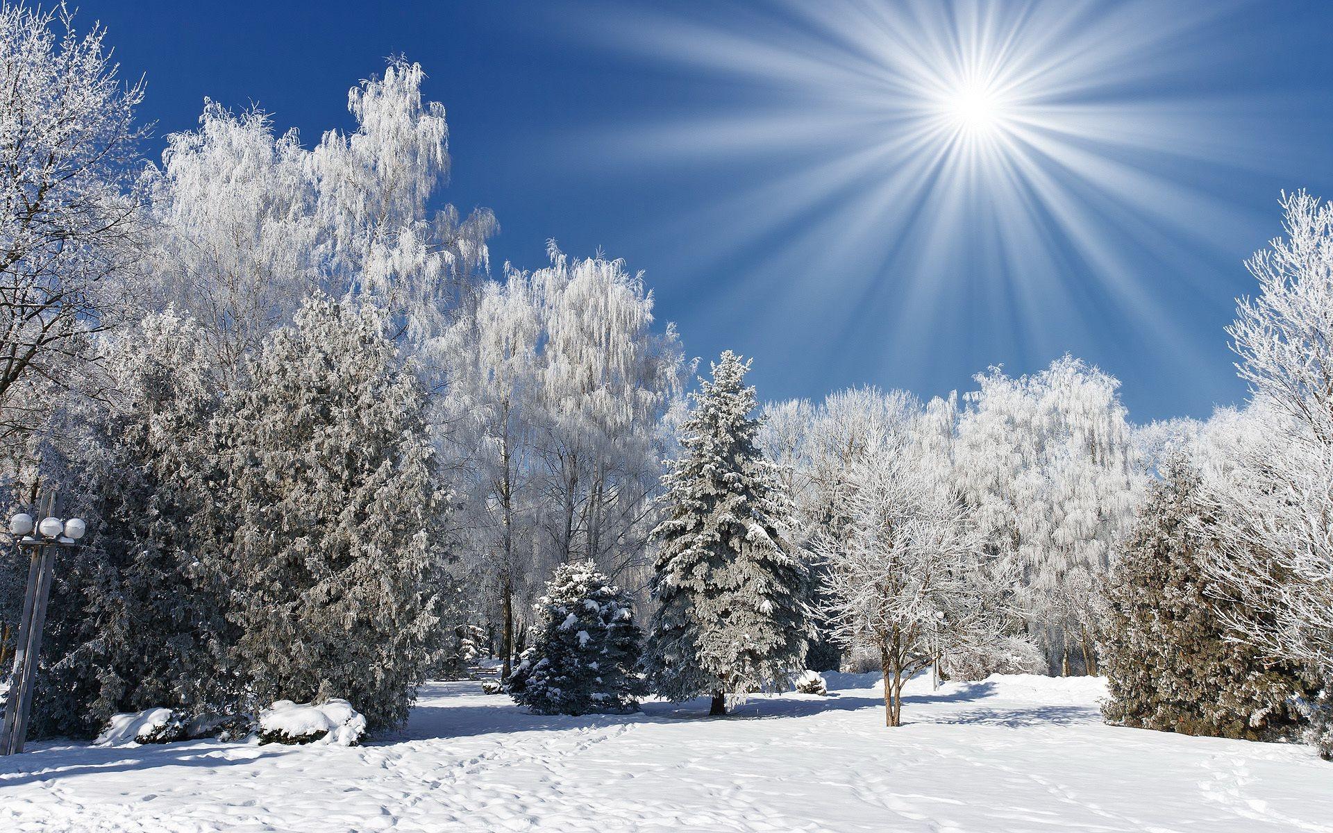 зимний солнечный лес  № 310423  скачать
