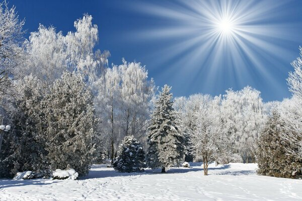 forest Nature trees snow winter sun frost