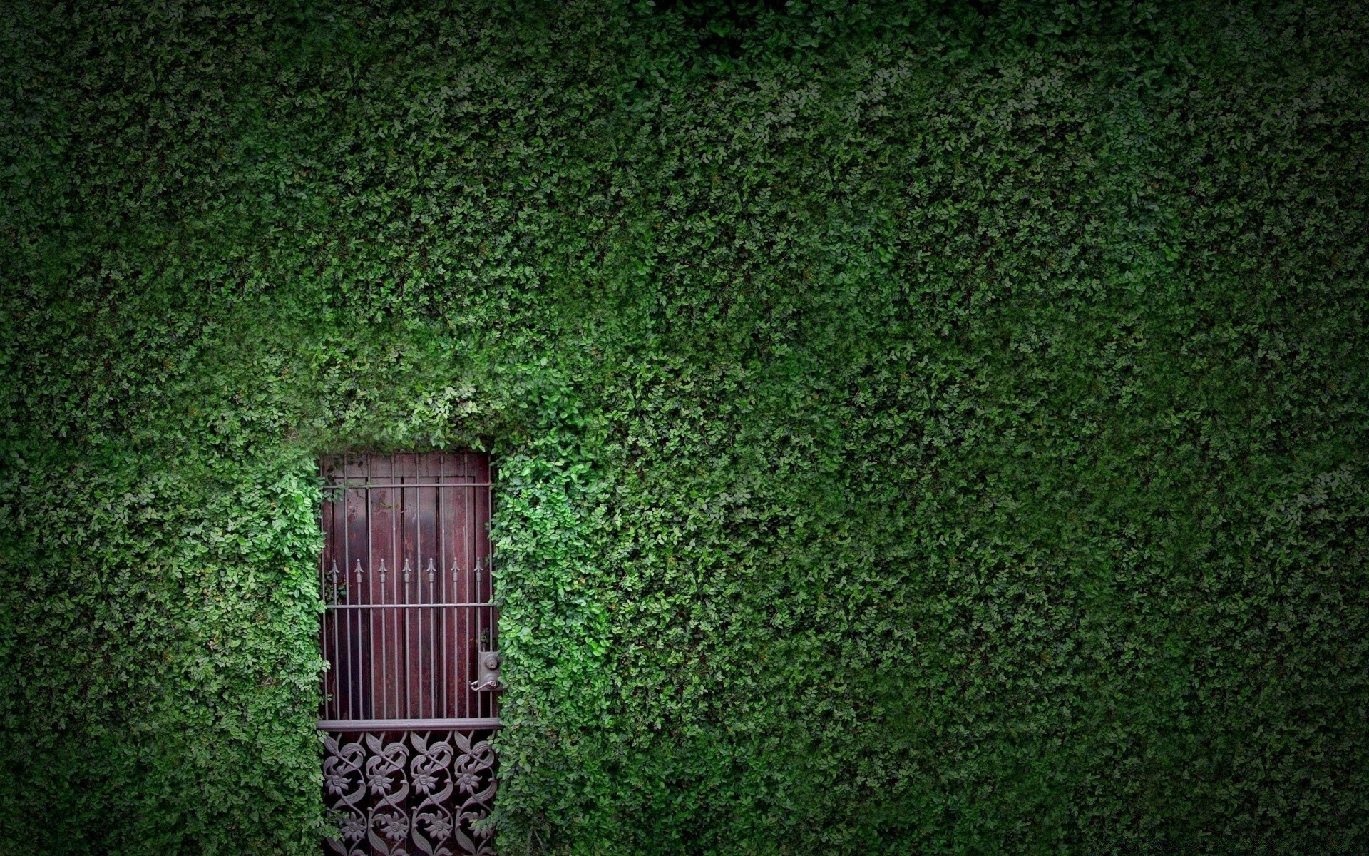 house and comfort desktop ivy texture wall wood old pattern construction architecture background house garden design leaf wallpaper color rough