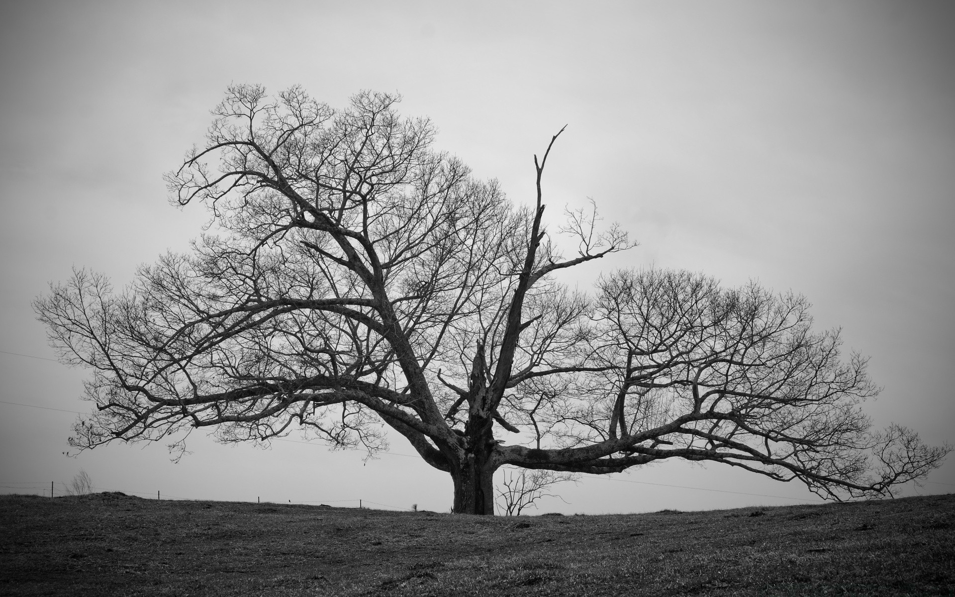 black and white tree landscape fog wood branch oak nature mist alone weather scenic fall