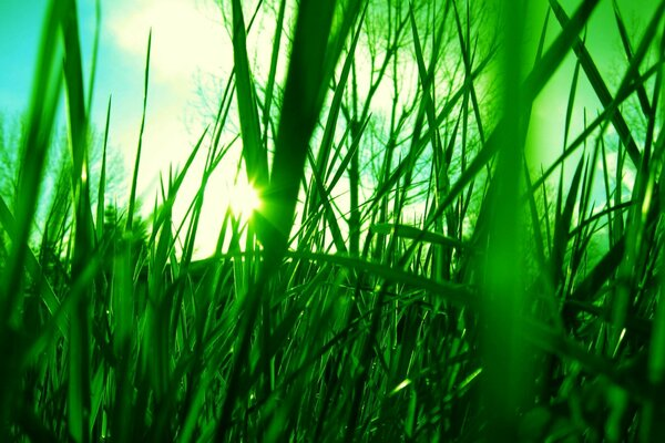 the sun the green Grass the sky the rays of light
