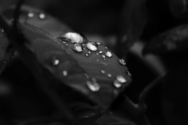Beautiful Drops Of Water On The Leaf