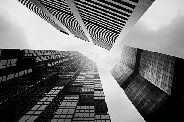 Skyscrapers In Black And White