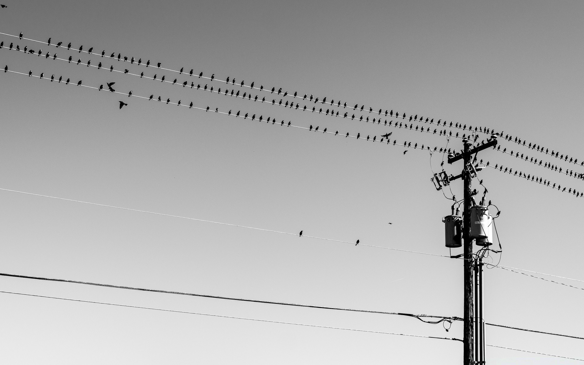 Birds On Wires Android Wallpapers