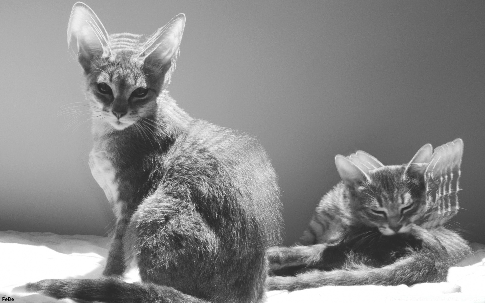 Two Cats Black And White Iphone Wallpapers For Free