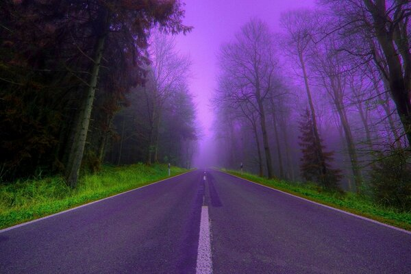 lilac road trees mist Forest beautiful night