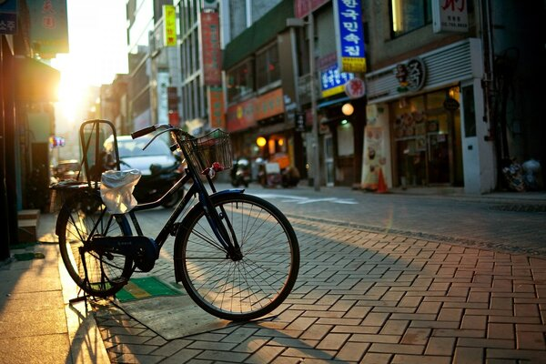 Bicycle, City