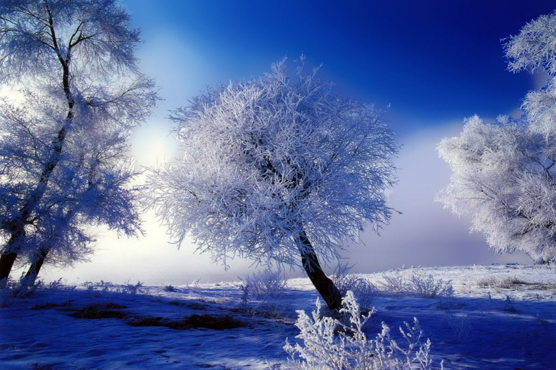 white frost Winter tree blue snow