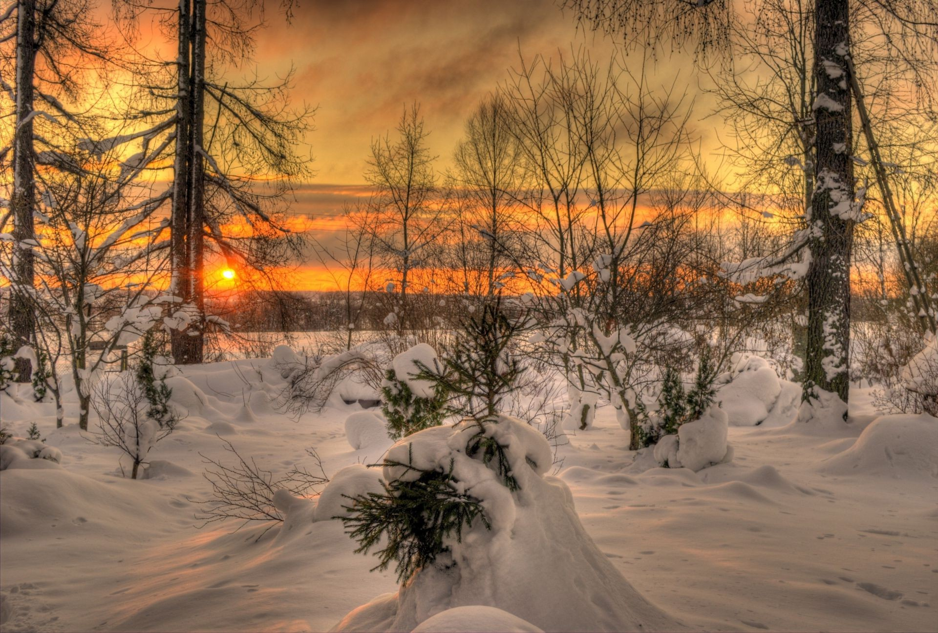 winter snow cold tree wood landscape frost dawn frozen ice fair weather weather scenic season nature branch sunset light
