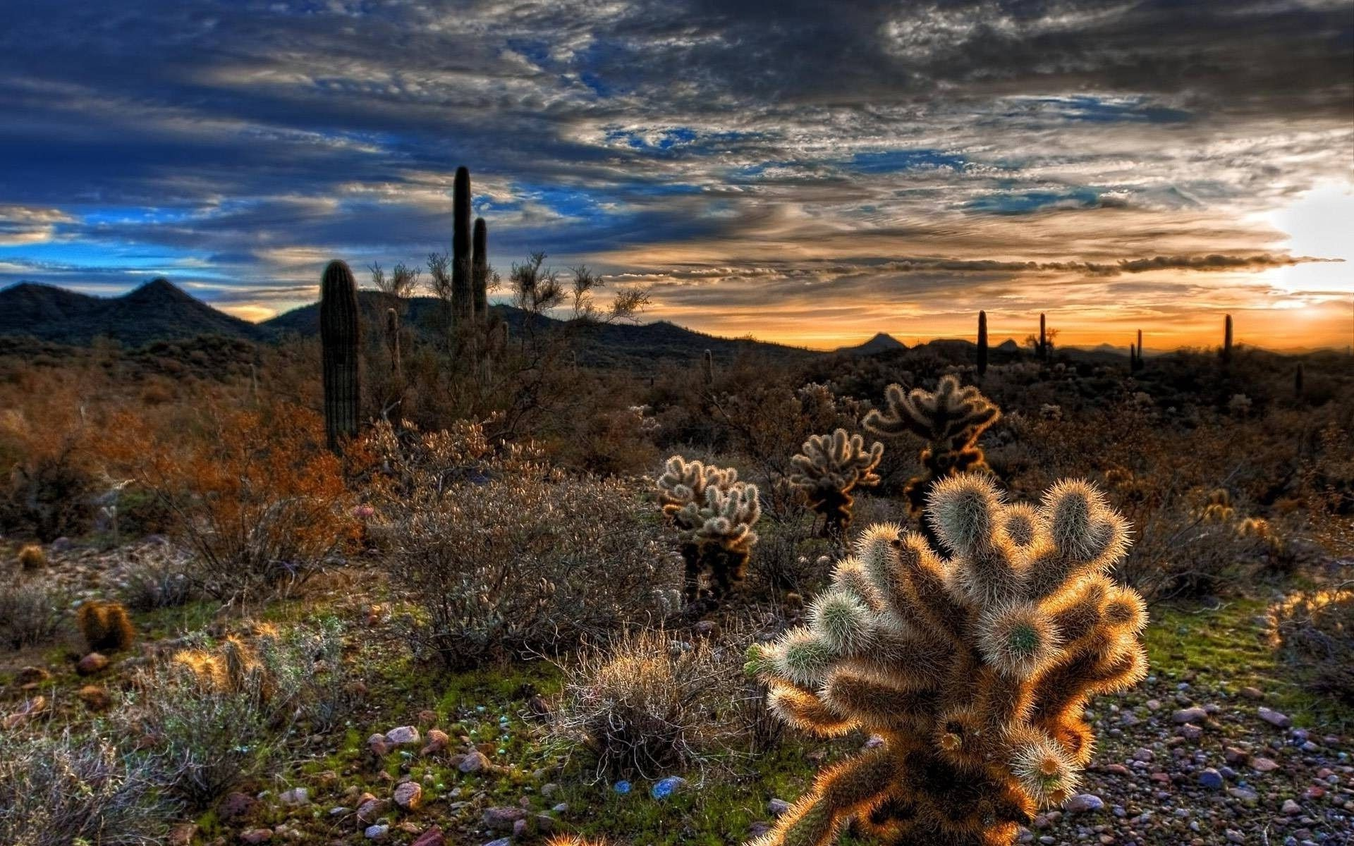 Desert Cactus Phone Wallpapers