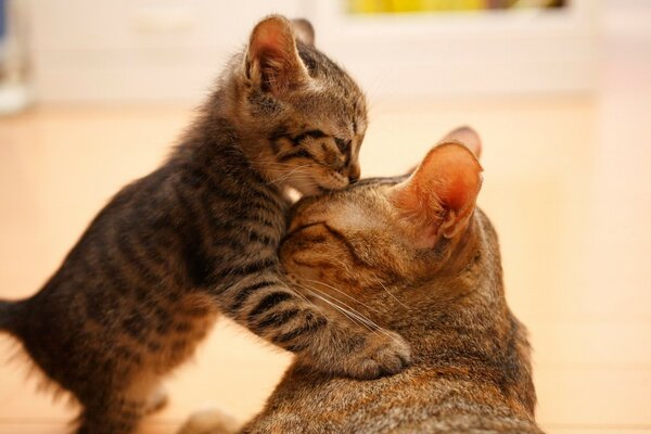 Tender Moment Between A Cat And Her Kitten