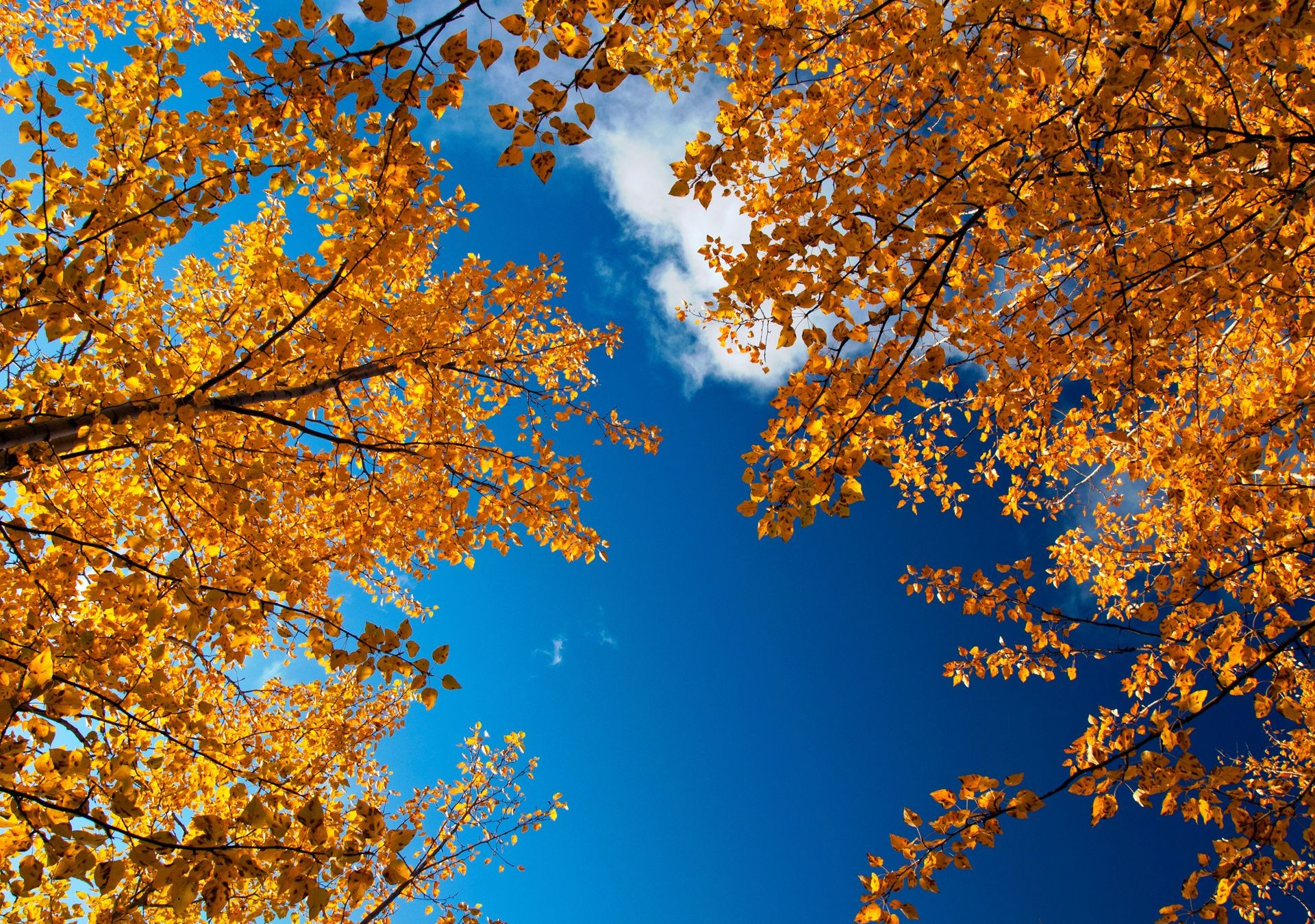 Golden autumn branches leaves sky Nature