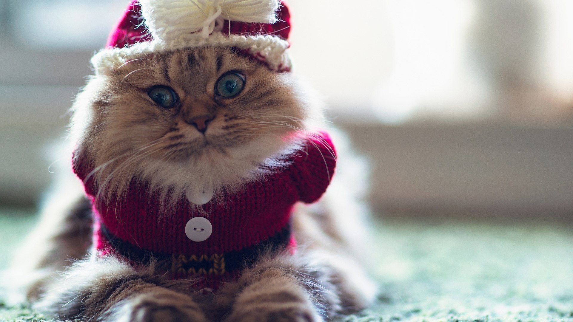 Funny Kitty Desktop Wallpapers For Free