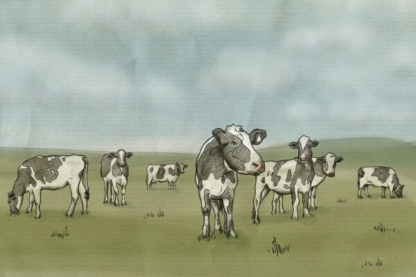 Cows Drawing