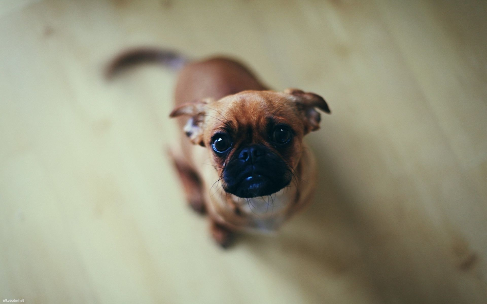 dogs dog portrait mammal cute pet canine puppy funny animal little one looking eye