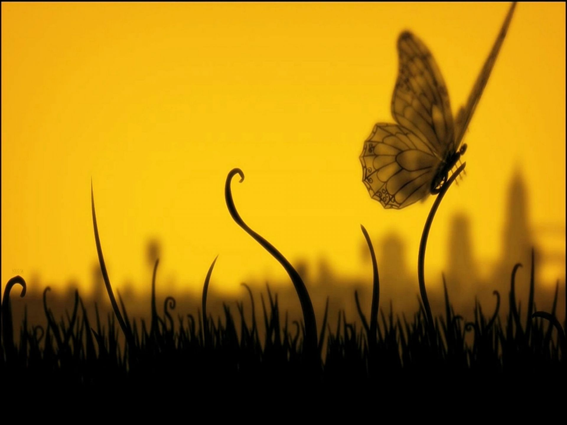 animals butterfly insect nature fly silhouette sun wing grass summer field animal sunset flower light garden flora color desktop wildlife hayfield