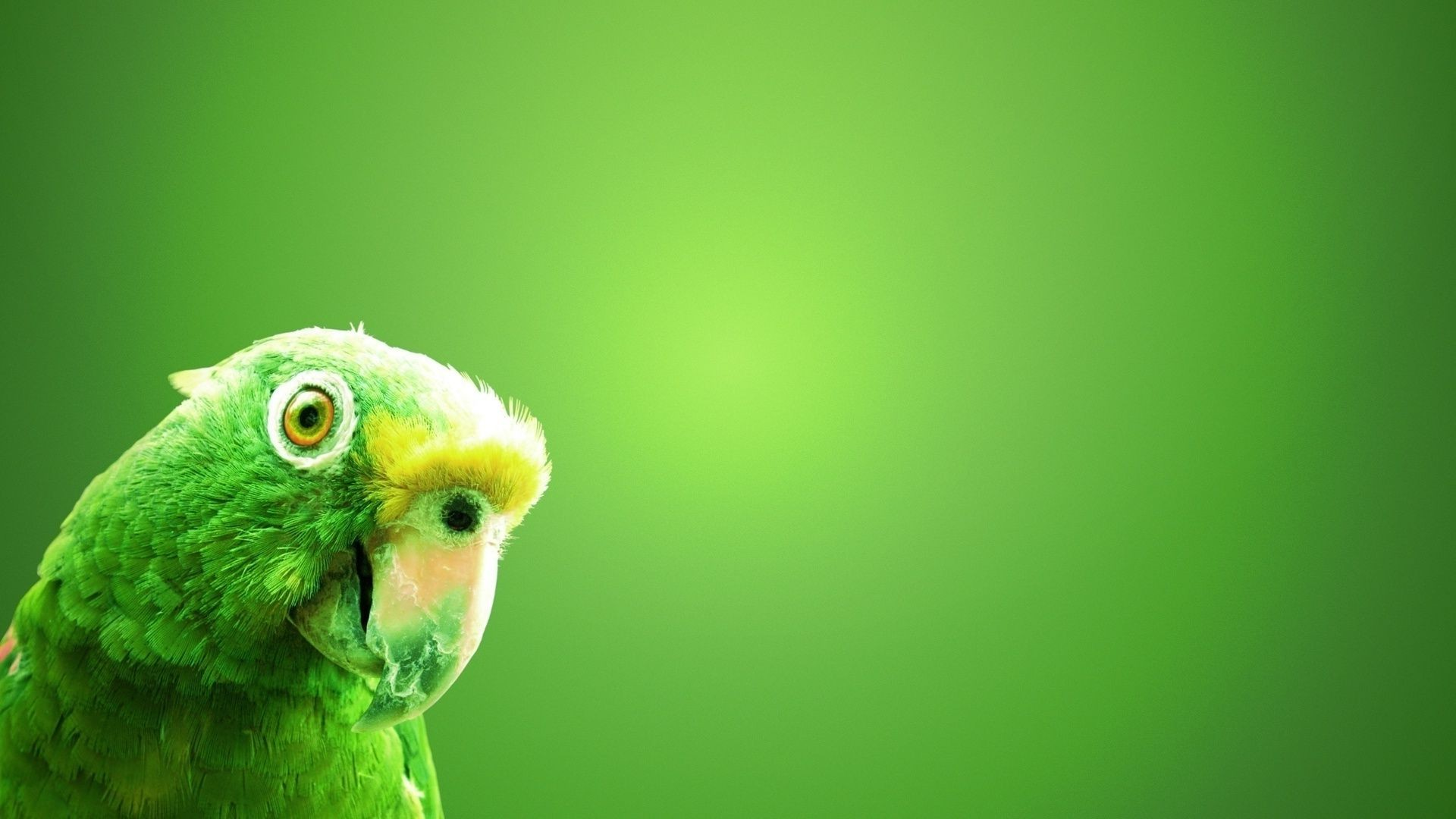 zaleny and green parrot background