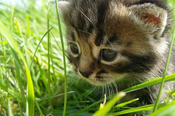 Little kitten grass