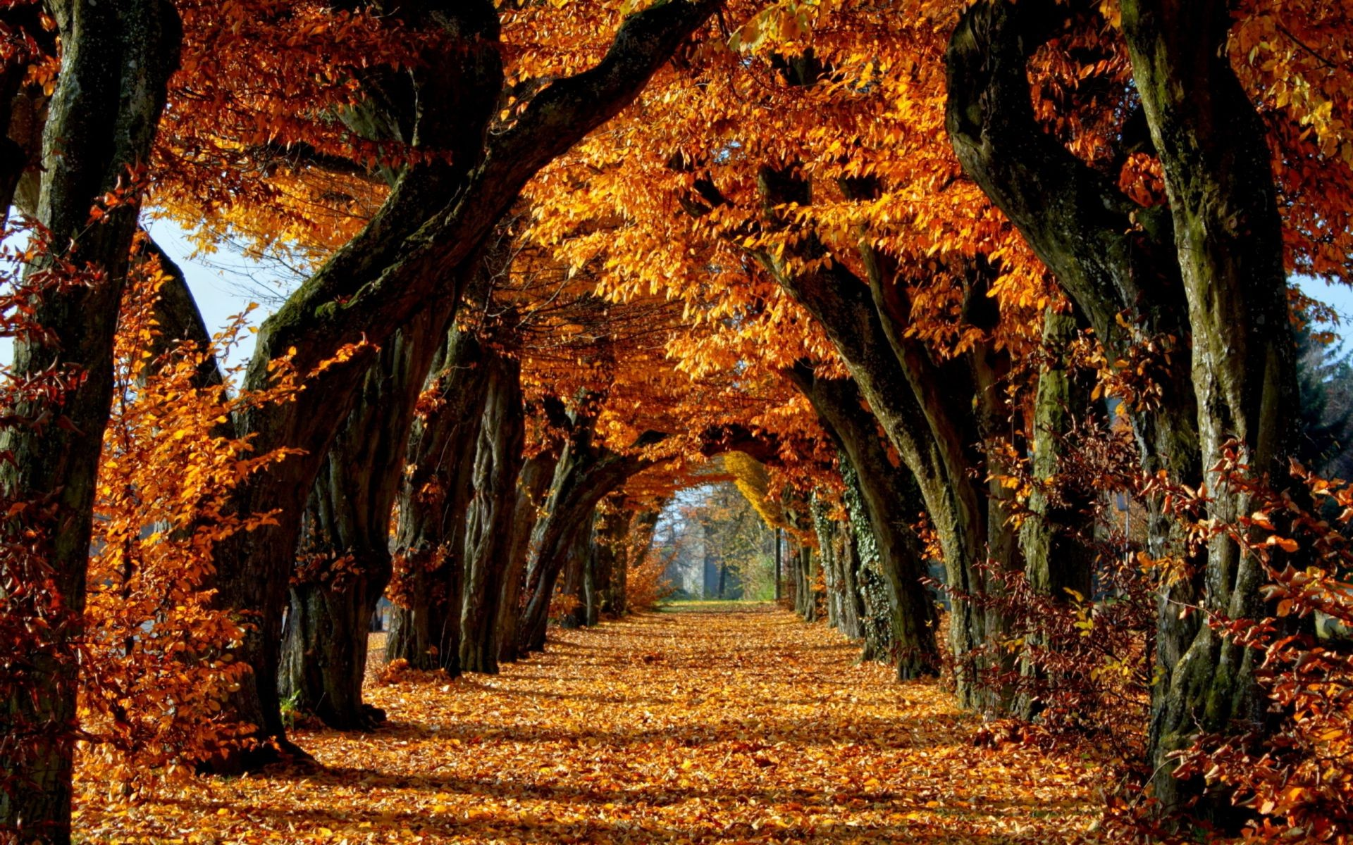 autumn fall tree leaf wood park nature maple landscape gold guidance season outdoors environment