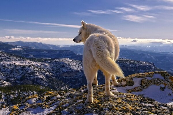 clouds snow Wolf mountains stones sky white