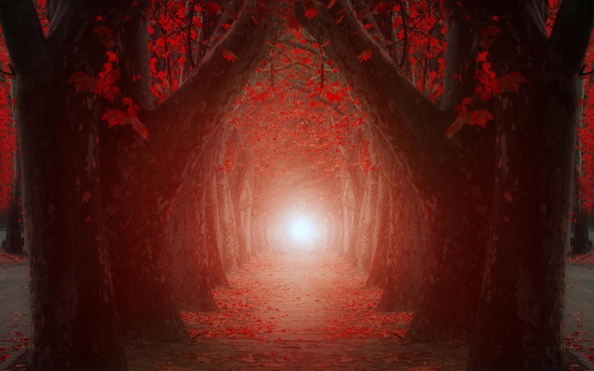 туннель из деревьев без смс